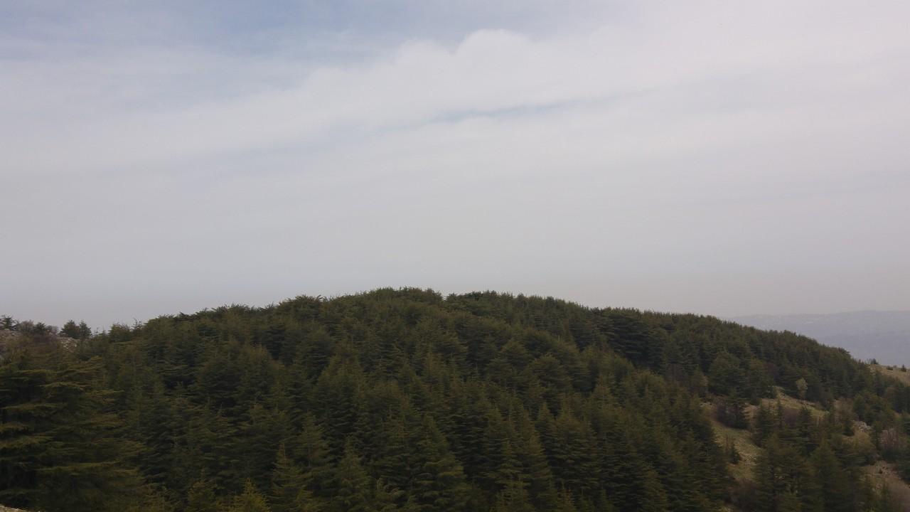 Barouk Sedir Ormanı