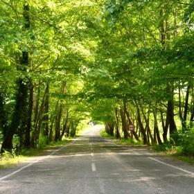 amasra safranbolu yolu